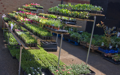 Our range of plants